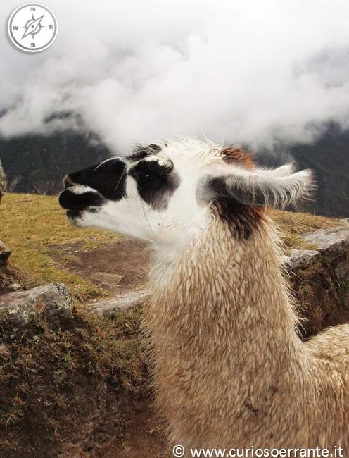 Il curioso errante - Machu Picchu la città perduta 01