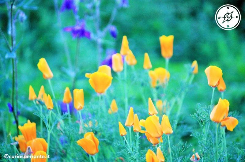 giardino di ninfa 12