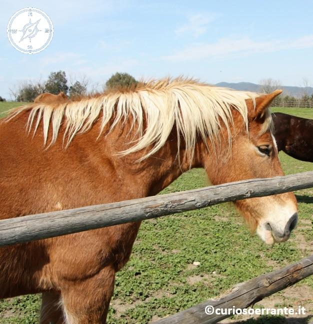 vulci - cavalli