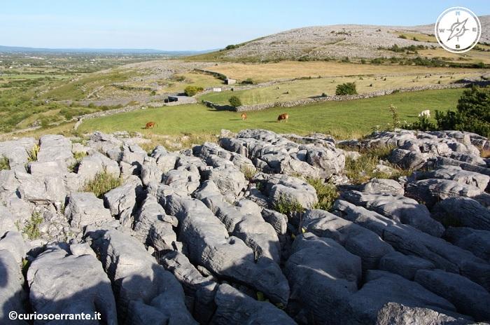 Burren - i pascoli e strati di roccia calcarea