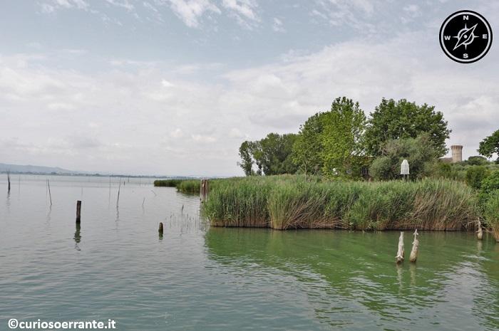 Isola Polvese - le coste con i canneti e la pesca