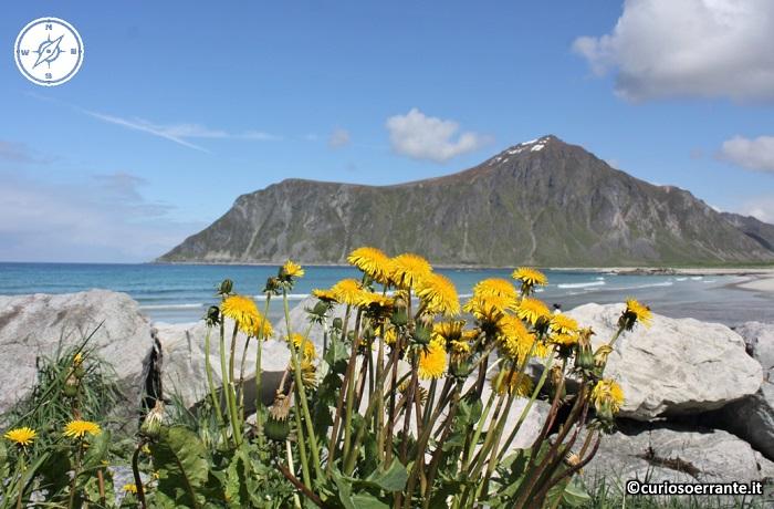 Isole Lofoten - Il clima mite delle isole