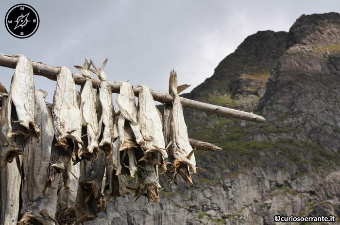 Isole Lofoten - Lo stoccafisso